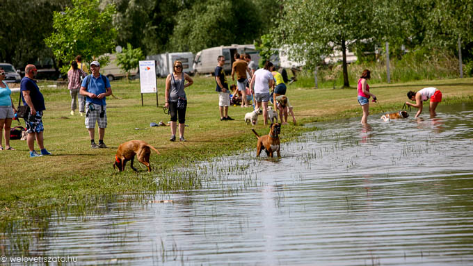 Kutyások írtak a Tisza-tavi kutya helyzetről