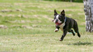 Kutya jó hírünk van – Tisza-tó kutyásoknak különkiadás!
