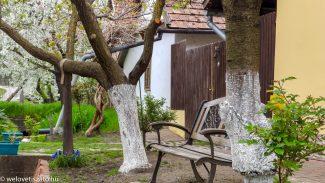 Nagykörű – Magyarország cseresznyéskertje
