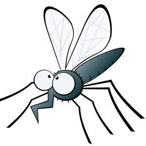 5 vicces (nem is vicces) dolog a szúnyogokról és 3 dolog, ami segít