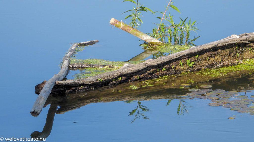A Tisza-tó tele lenne szeméttel? Nem!
