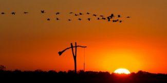 Darules hajnalban kisvonattal – Hortobágy-Halastó