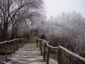 Téli kalandozások a Tisza-tónál
