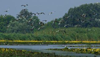 Benépesülő madárrezervátum a Tisza-tavon – Tiszafüred