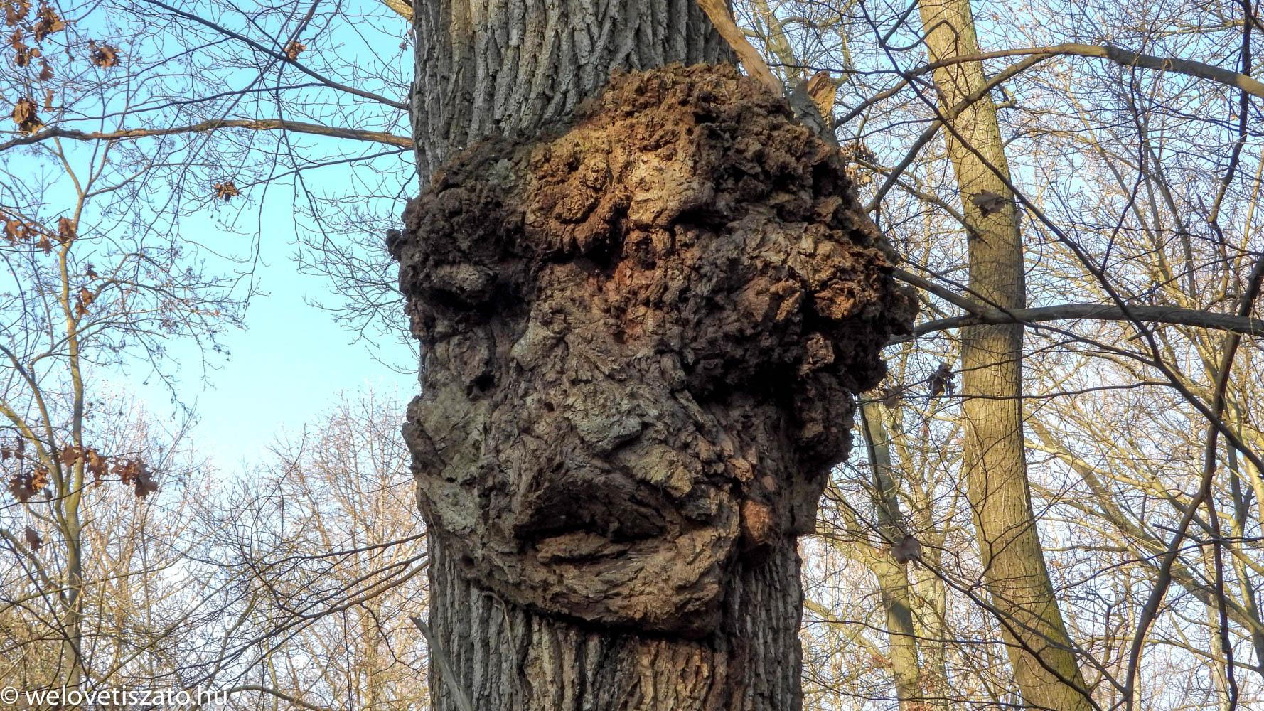 Tiszaigari Arborétum - százéves fák