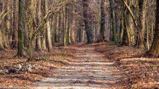Nagy séta a Tiszaigari Arborétum útjain
