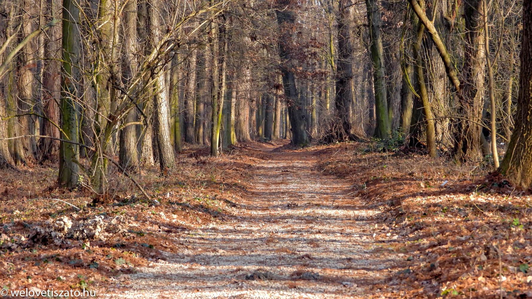 Tiszaigari Arborétum - mocsári ciprus erdő