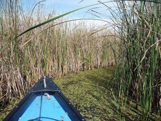 TÖRÖLVE! – Tisza-tavi április – nyitótúra az éledő tavon – Abádszalók