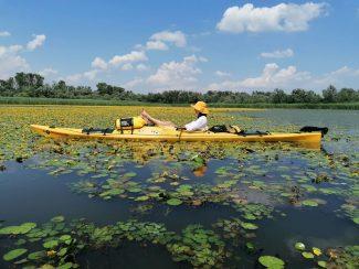 Madárvonulás túra a Tisza-tónál – Poroszló