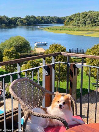 Ki hagyná otthon a kutyáját? Ha elhozhatja a Tisza-tóhoz…