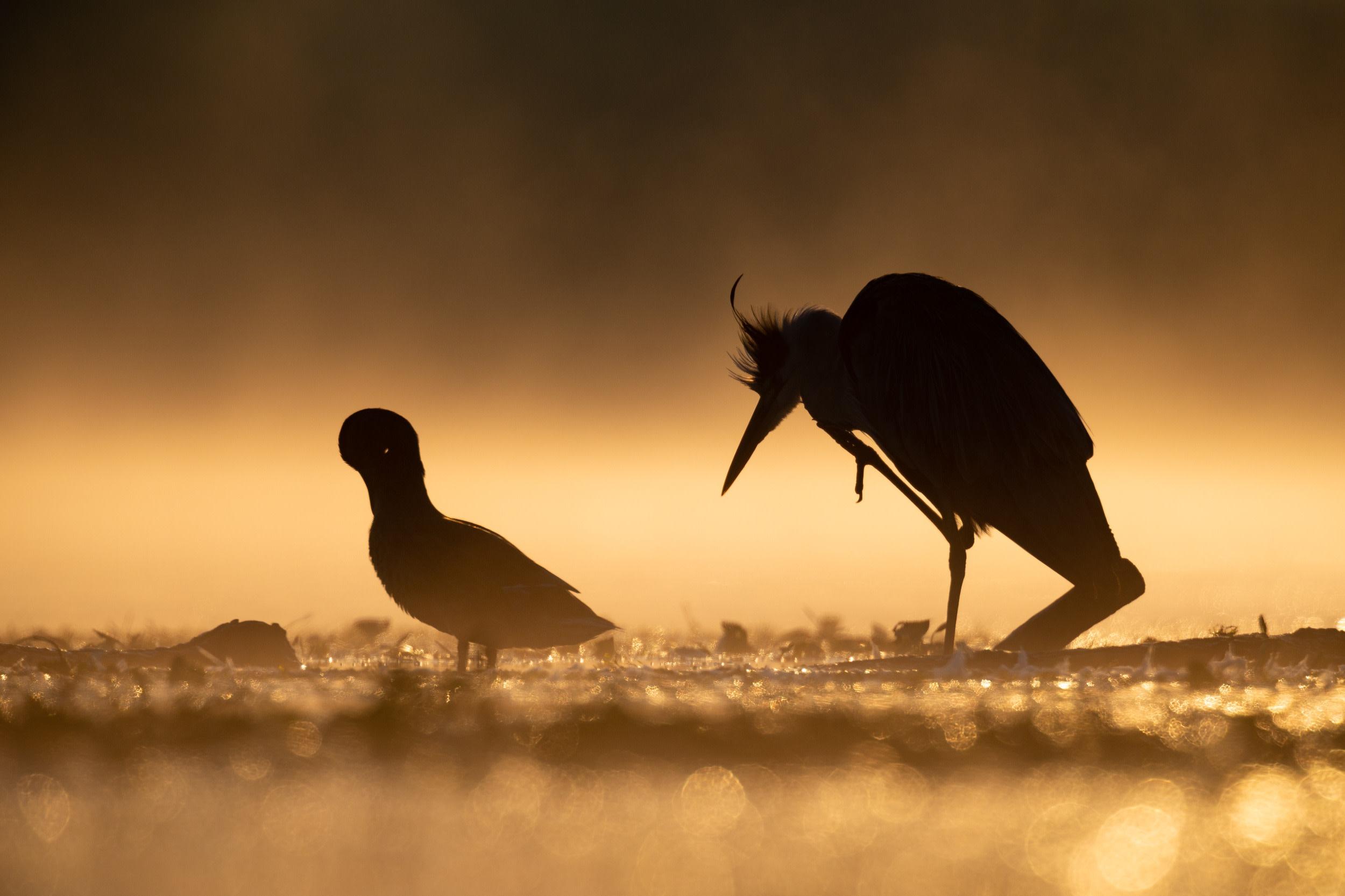 Tisza-tó fotópályázat