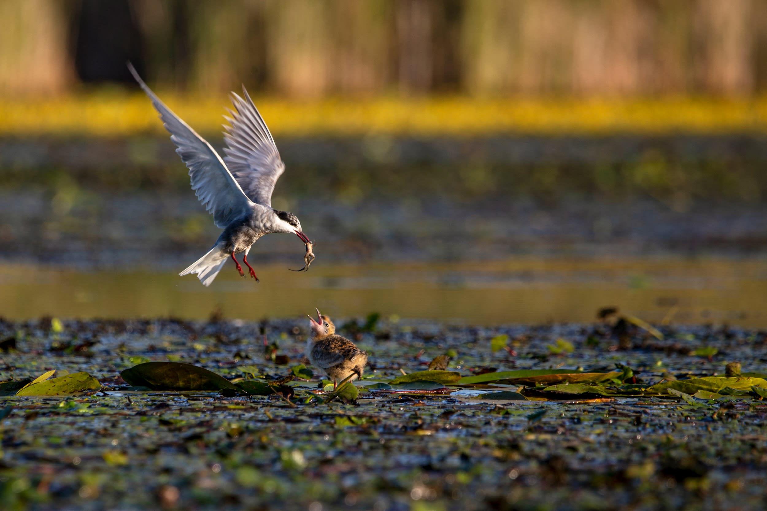 Tisza-tó fotópályázat, 1. helyezett