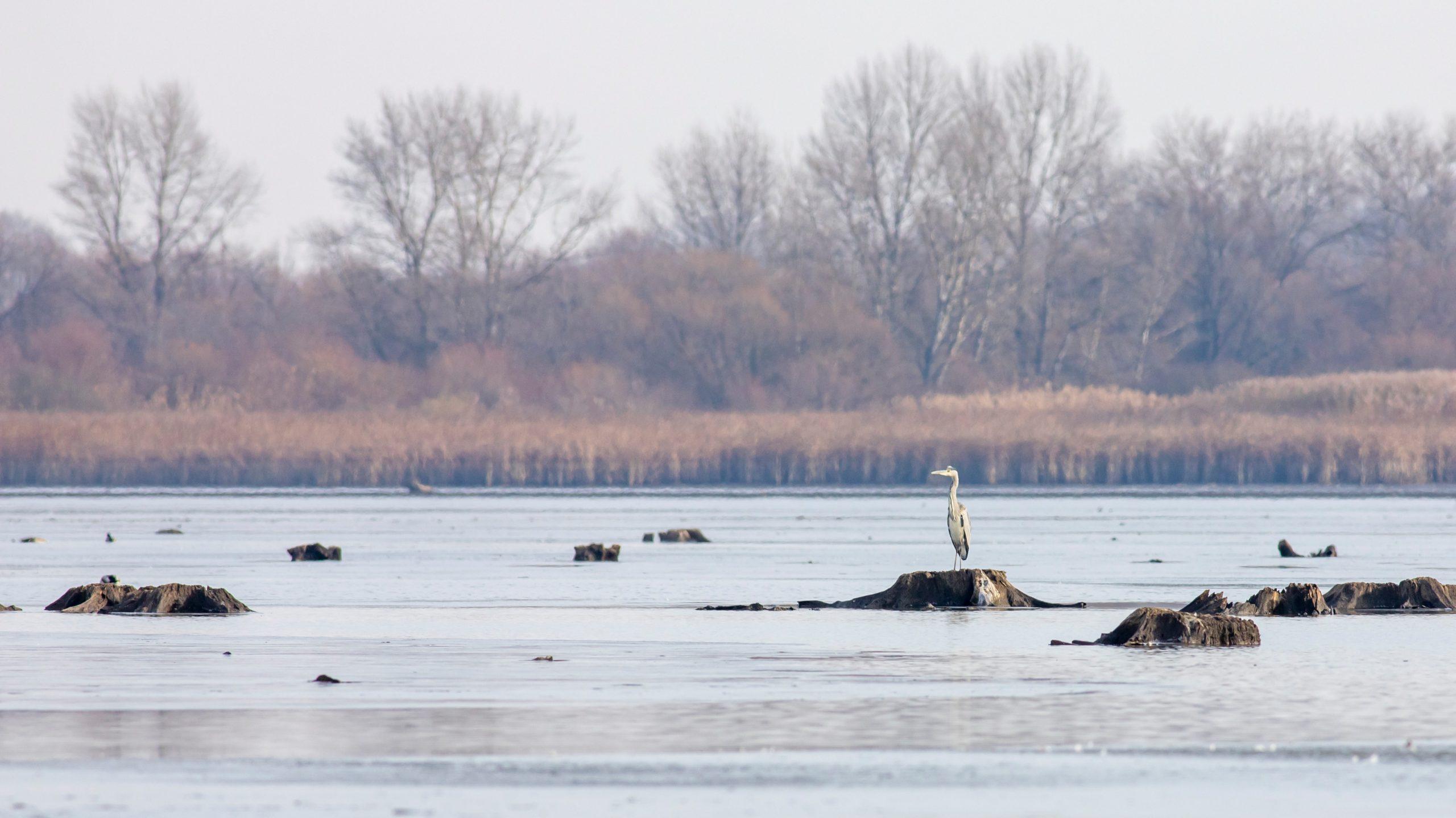 liba, lilik és kacsa csapatok a Tisza-tónál