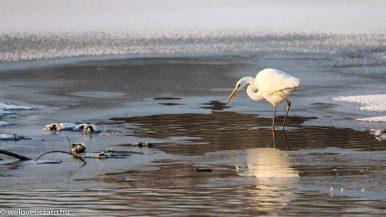 Gyere a Tisza-tóra, napos-fagyos hétvége jön! Túrázzunk! :)