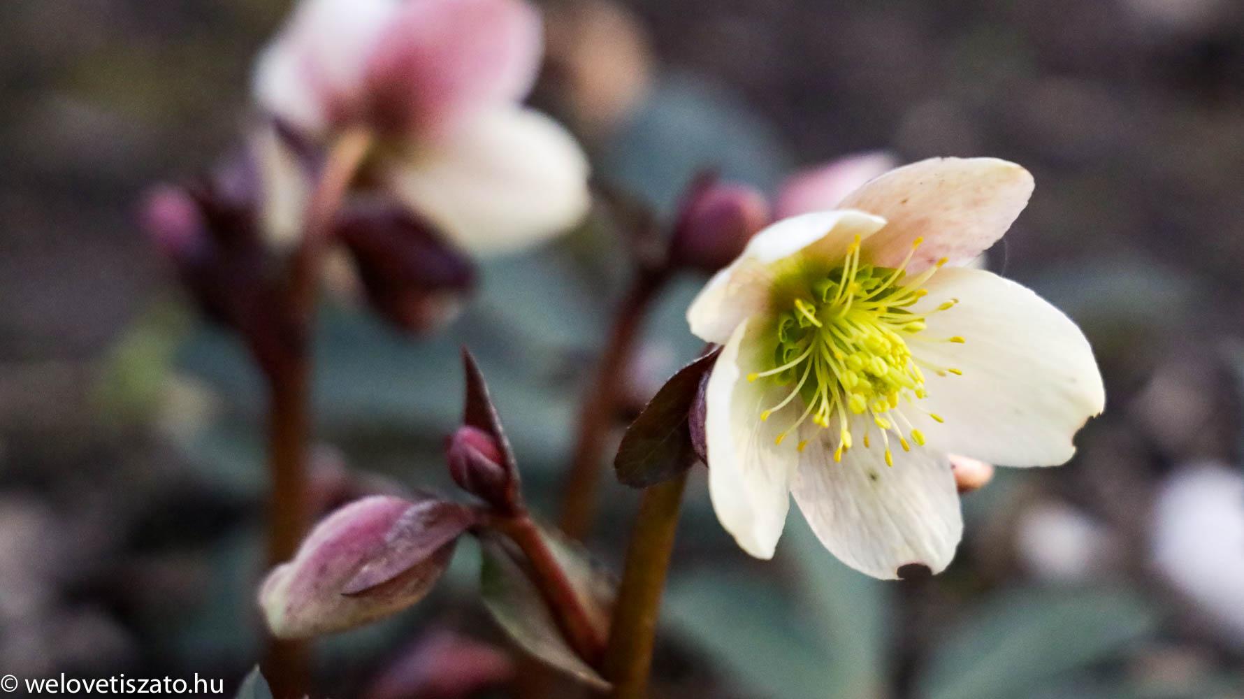 programajánló március 15 - tavaszi virágok