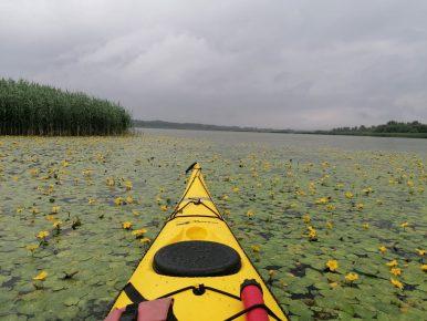 Tündérfátyol-rengeteg: vízitúra a Tisza-tónál